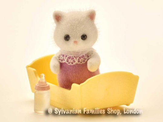 Teak Persian Cat Baby