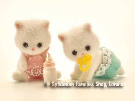 Teak Persian Cat Twins