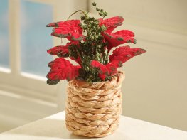 [DB] Poinsettia Plant - Red