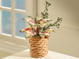 [DB] Poinsettia Plant - White
