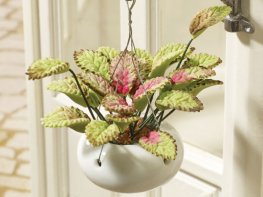 [DB] Hanging Basket - Greenery